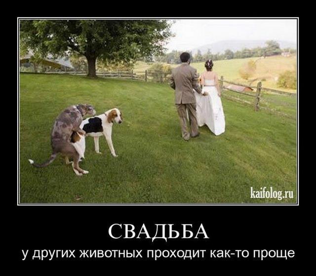 Свадебные демотиваторы. Часть-2 (50 фото)