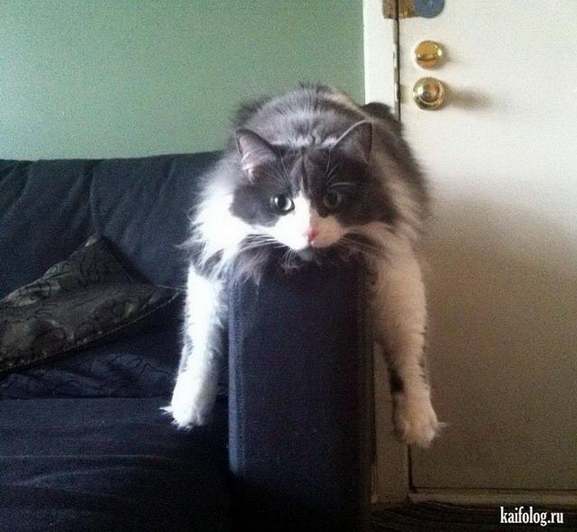 Приколы про котов (55 фото + видео)