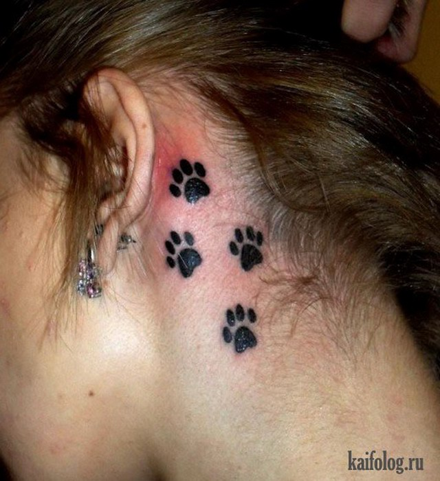 Татуировка на ухе у кота