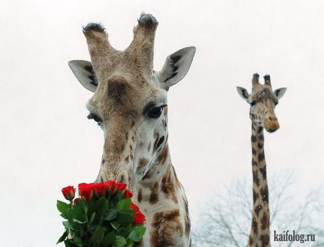 Смешные животные (55 фото)