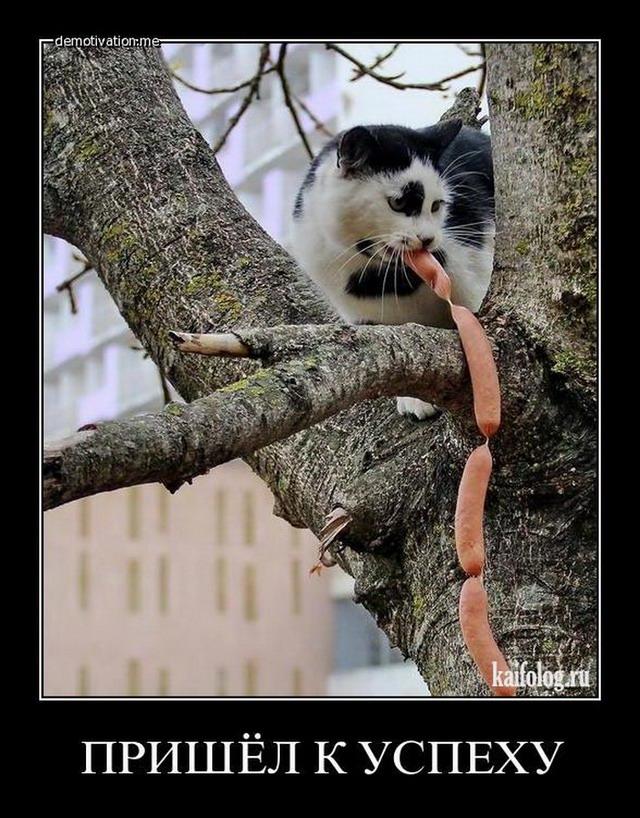 Кошка с котенком картинка для занятий худенькие