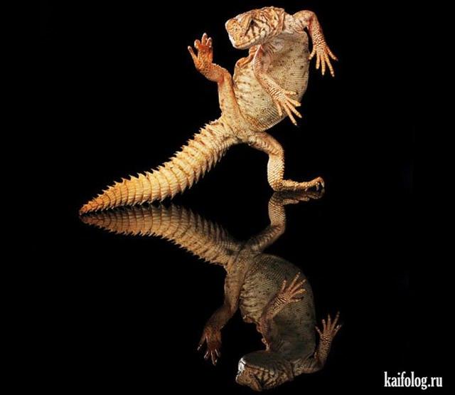 Танцующие животные (60 фото)