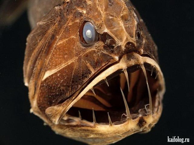 Ужастики водоемов (55 фото)
