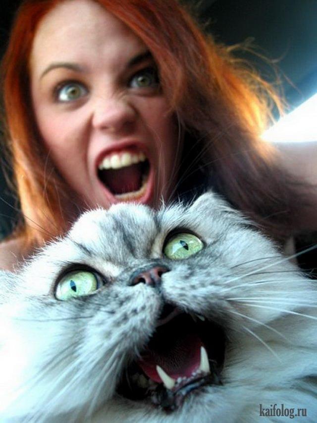 Смешные коты 60 фото