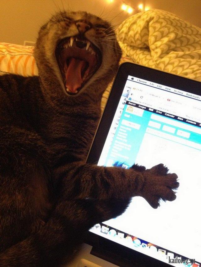 Смешные коты (60 фото)