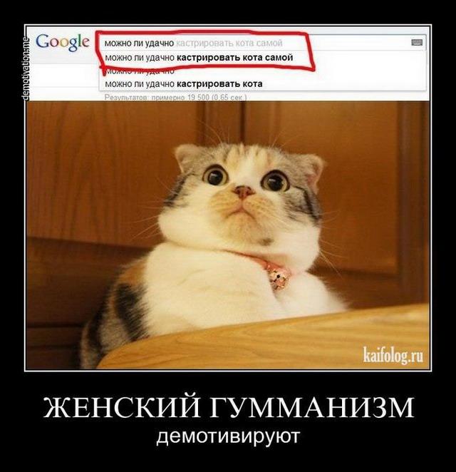 Демотиваторы про котов (55 фото)