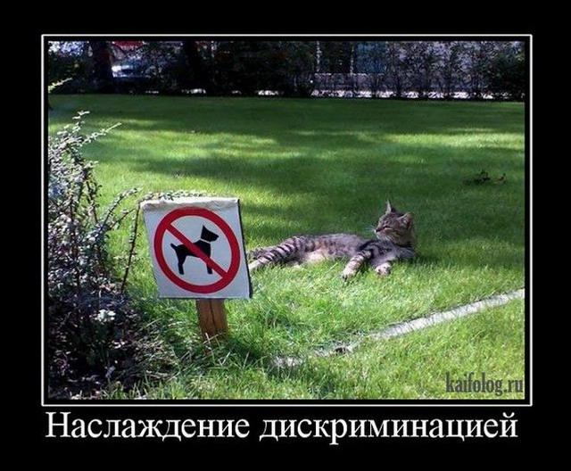 http://kaifolog.ru/uploads/posts/2013-03/thumbs/1363776418_004_1.jpg
