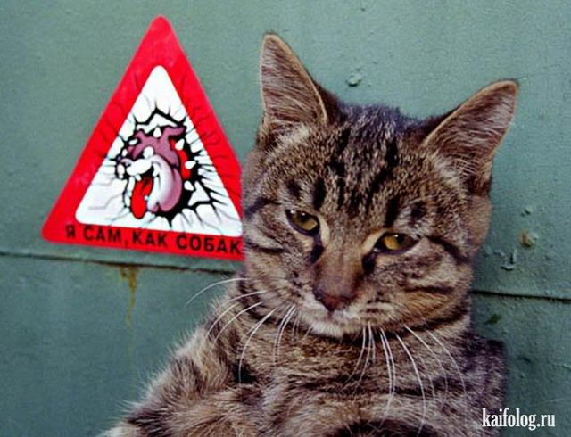 Прикольные русские коты (55 фото)