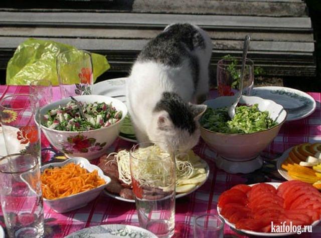 Русские коты (55 фото)