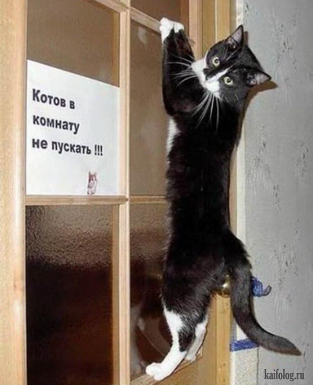 Русские коты картины