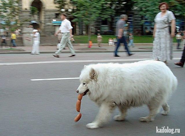 Прикольные животные (60 фото)