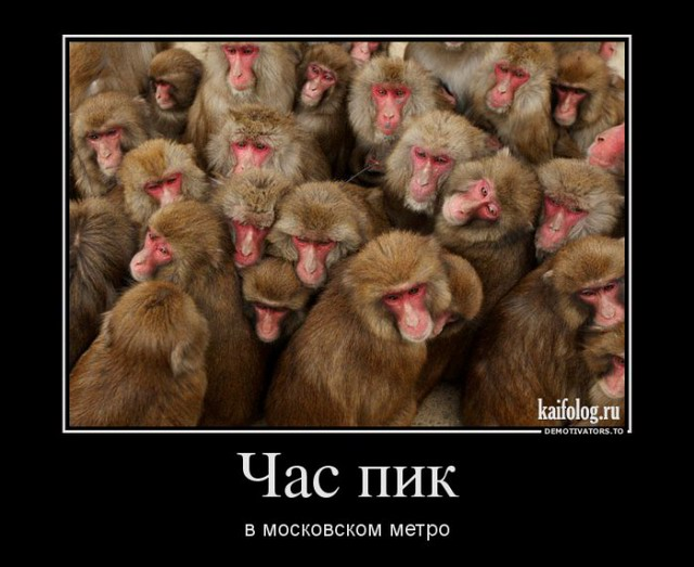 Демотиваторы - 177 (45 фото)