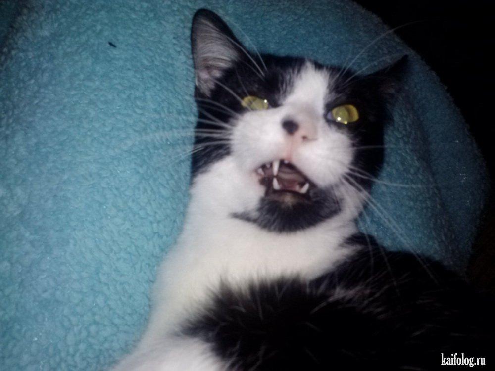 видео приколы про котов с озвучкой