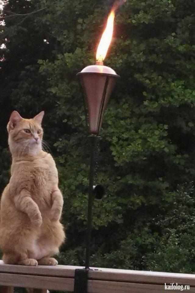 Приколы про кошек (60 фото)
