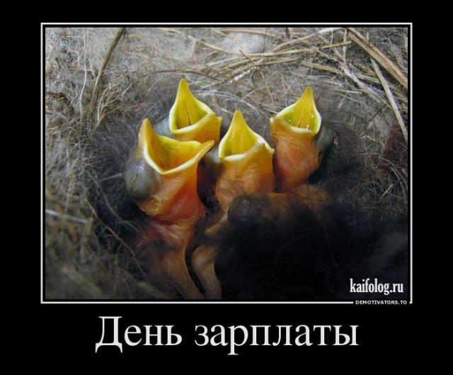 Демотиваторы - 181 (50 фото)