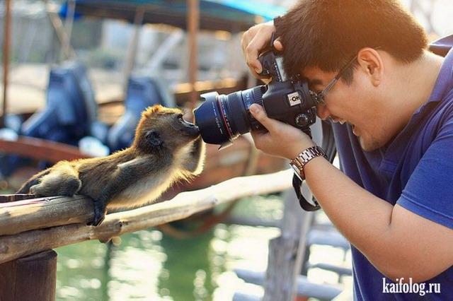 Животные фото приколы (60 фото)