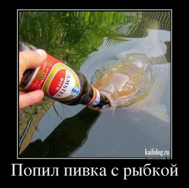 Демотиваторы - 183 (40 фото)