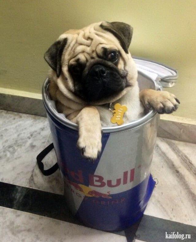 Смешные собаки (55 фото)