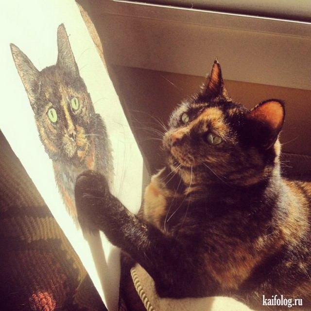 Смешные котэ (60 фото)