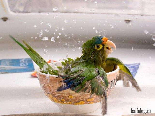 Летние животные (55 фото)