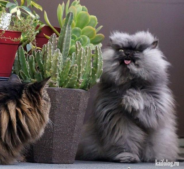 Смешные кошки (45 фото)