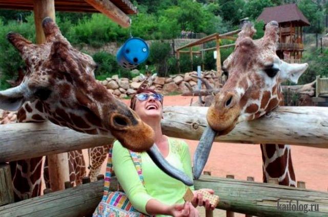 Смешные животные (60 фото)