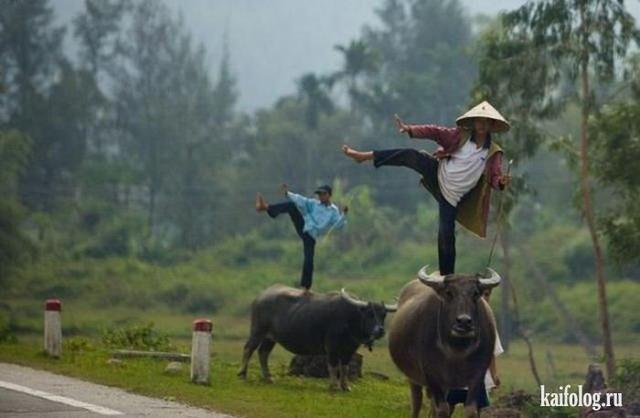 Прикольная азия. Часть-4 (60 фото)