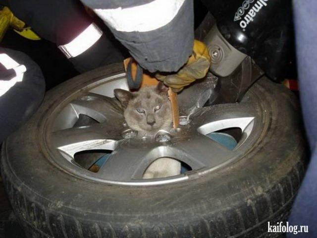 Зафиксированные коты (50 фото)