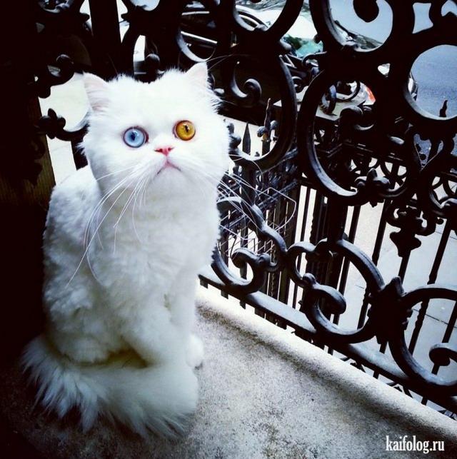 Коты и кошки (55 фото)