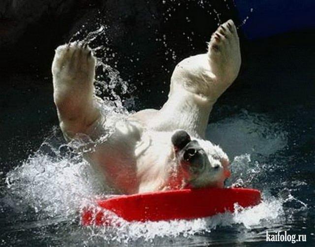 Животный серфинг (40 фото)