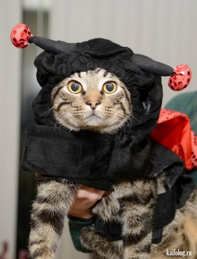 Кошки и коты (55 фото)
