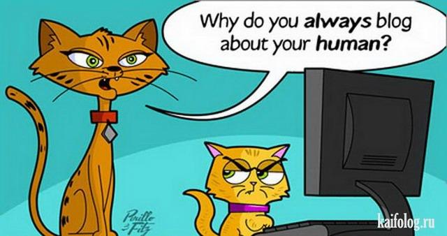 Коты-картинки (65 картинок)