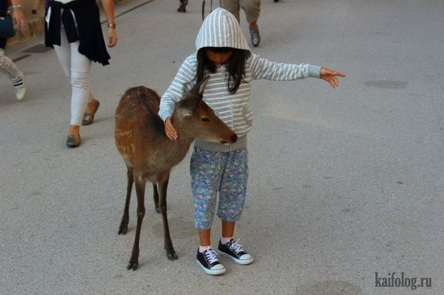 Забавные животные (55 фото)