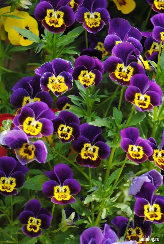 Цветы (55 фото)
