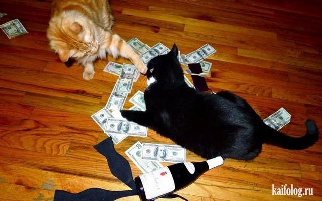 Богатые коты (50 фото)