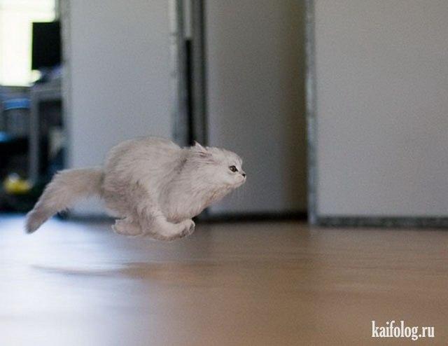 Коты года (60 фото)