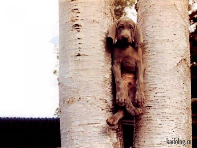 Смешные животные или фотоприколы про животных (60 фото)