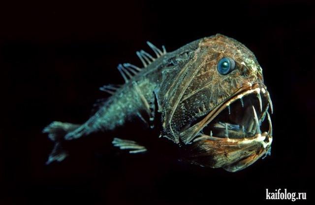 Морские гады (30 фото)