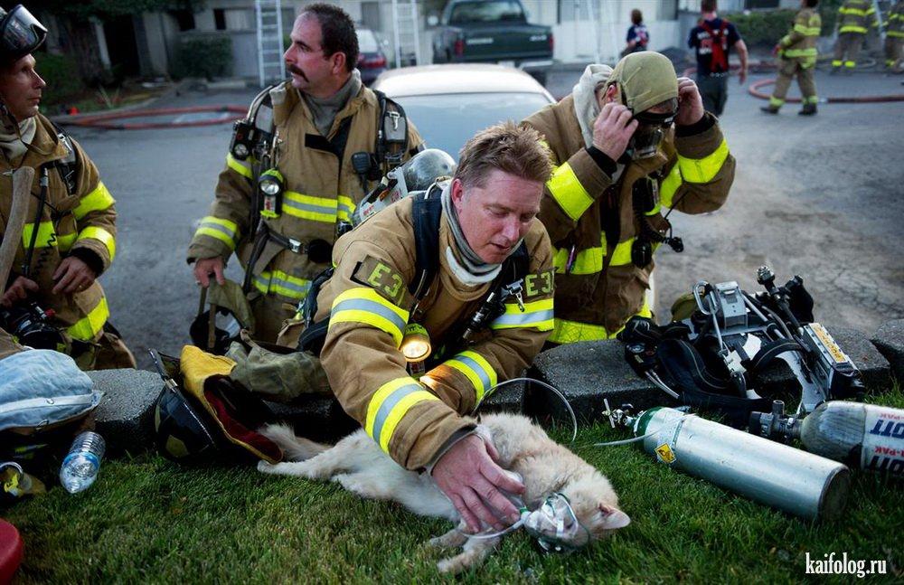 страшного фото пожарный спас человека поле установка