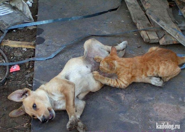 Одноклассники коты (70 фото)
