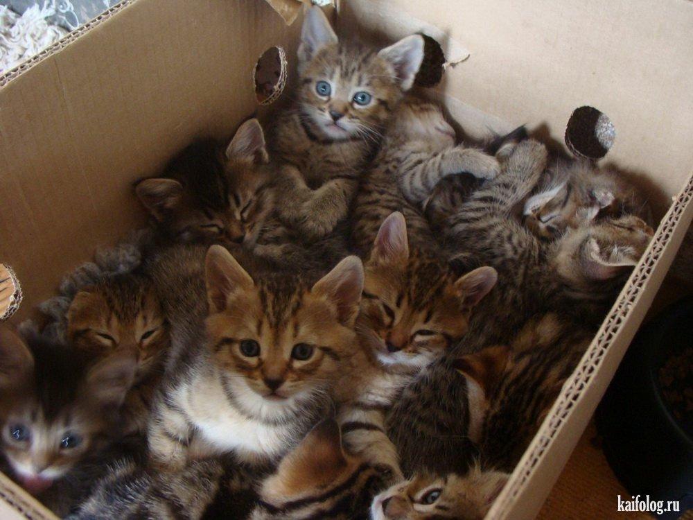 Смешные котики 55 фото