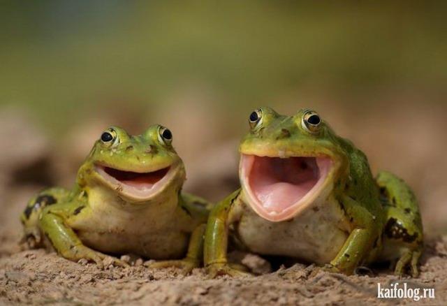 Смешные звери (60 фото)