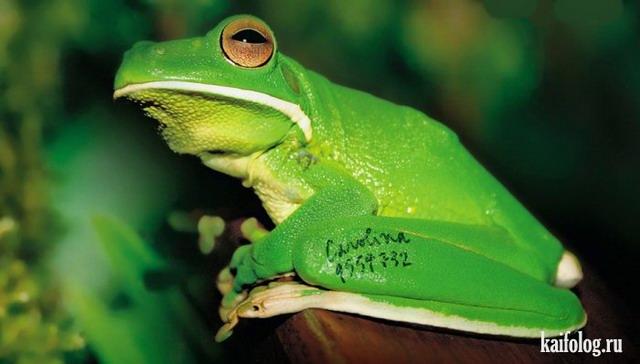 Зеленые приколы (60 фото)