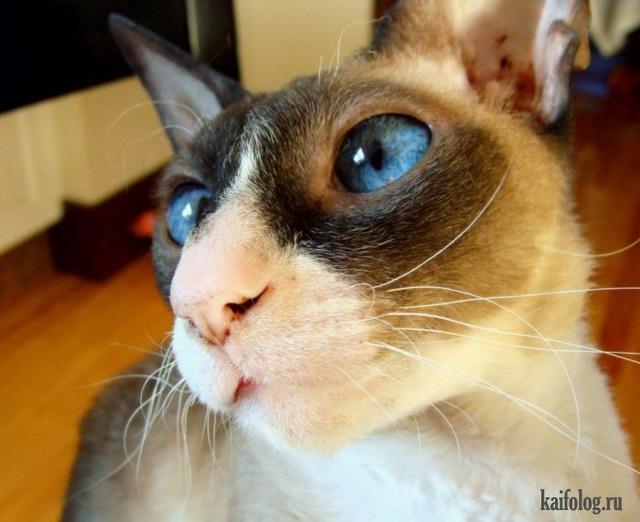Когда собирала приколы про котов