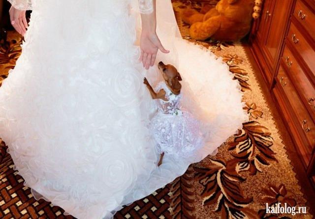 Приколы со свадеб (55 фото)