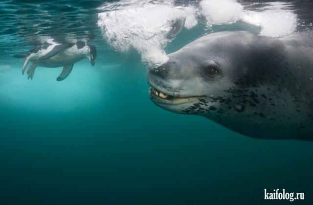 Арктика и Антарктика Пола Никлена (60 фото)