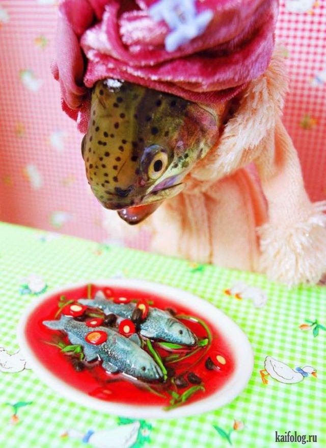 Рыбья жизнь (23 картинки)