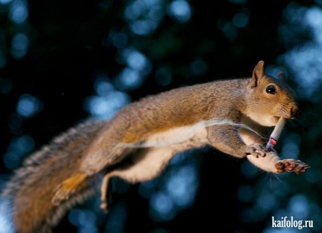 Животные приколы (50 фото)