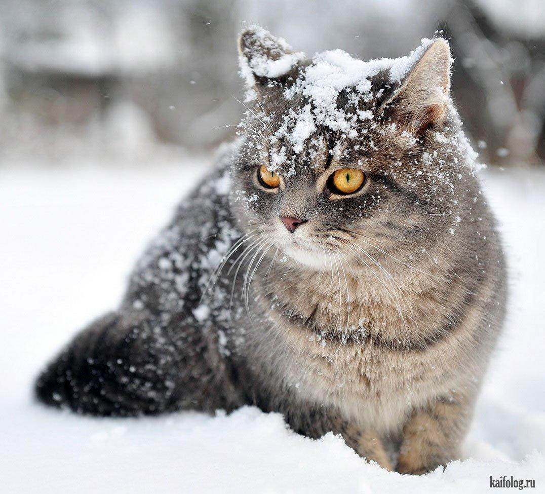 Красивые фото животных в снегу