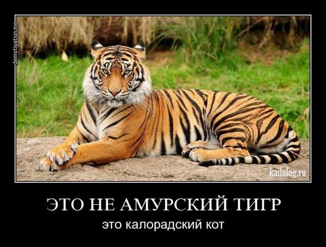 Демотиваторы - 220 (45 демотиваторов)